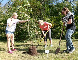 Photo of three students planting a tree. Links to Gifts from Retirement Plans